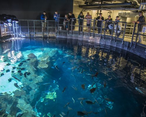 Observation Deck Above Shark Reef at Greensboro Science Center