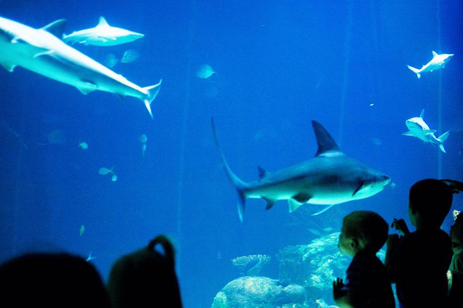 Greensboro Aquarium